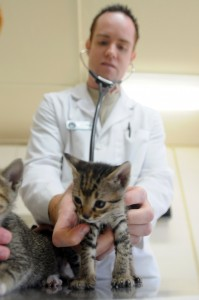 physical exam for pet