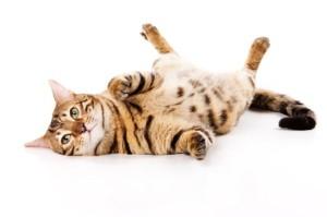 cat-on-back