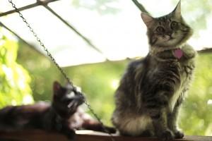 cat behavior perch
