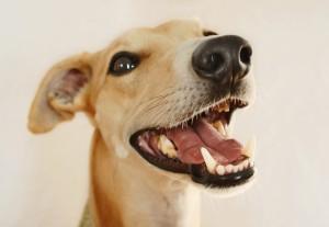 puppy teeth care