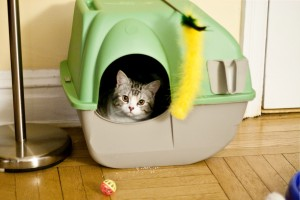 litter box issues 3