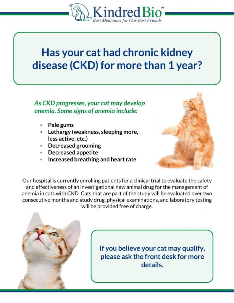 Kidney Disease Trial Flyer