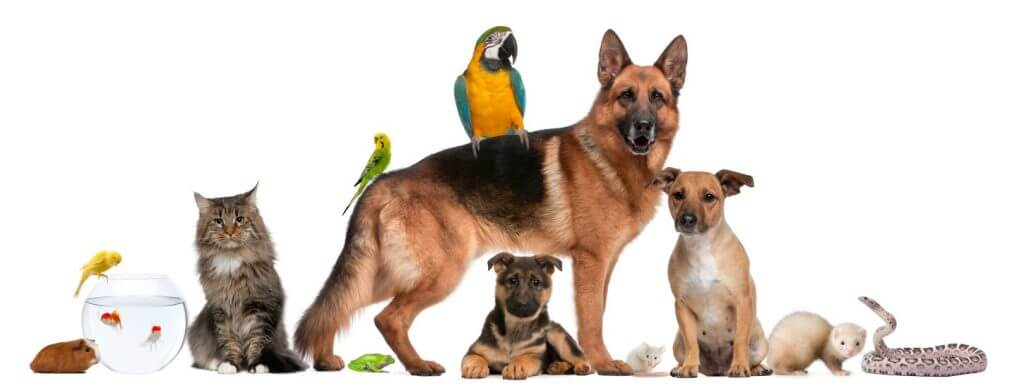 Animals in group