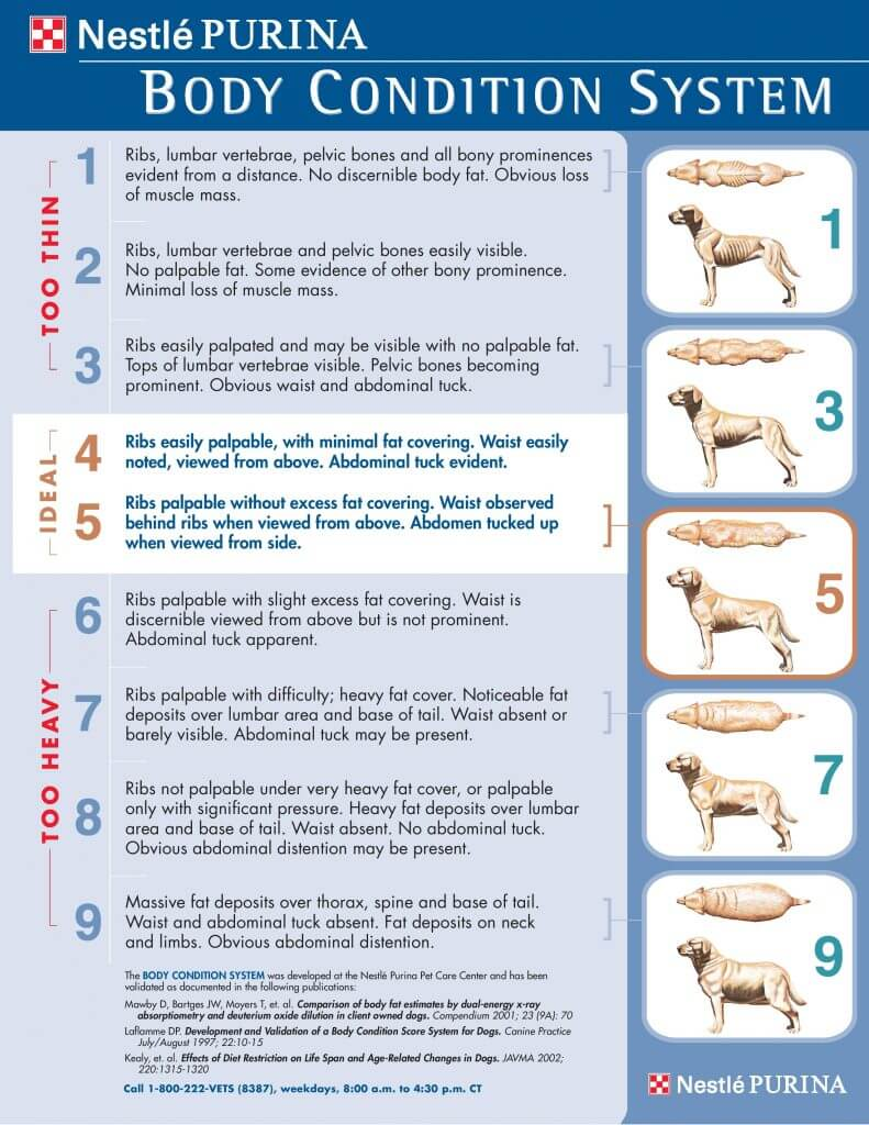 Body Condition Score Chart Canine