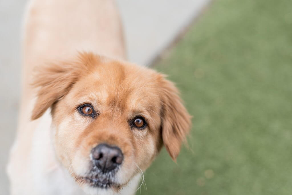 Collierville doggie daycare dog