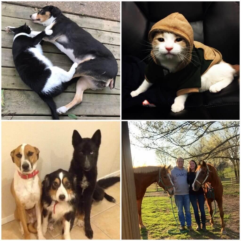Dr Buco Pets