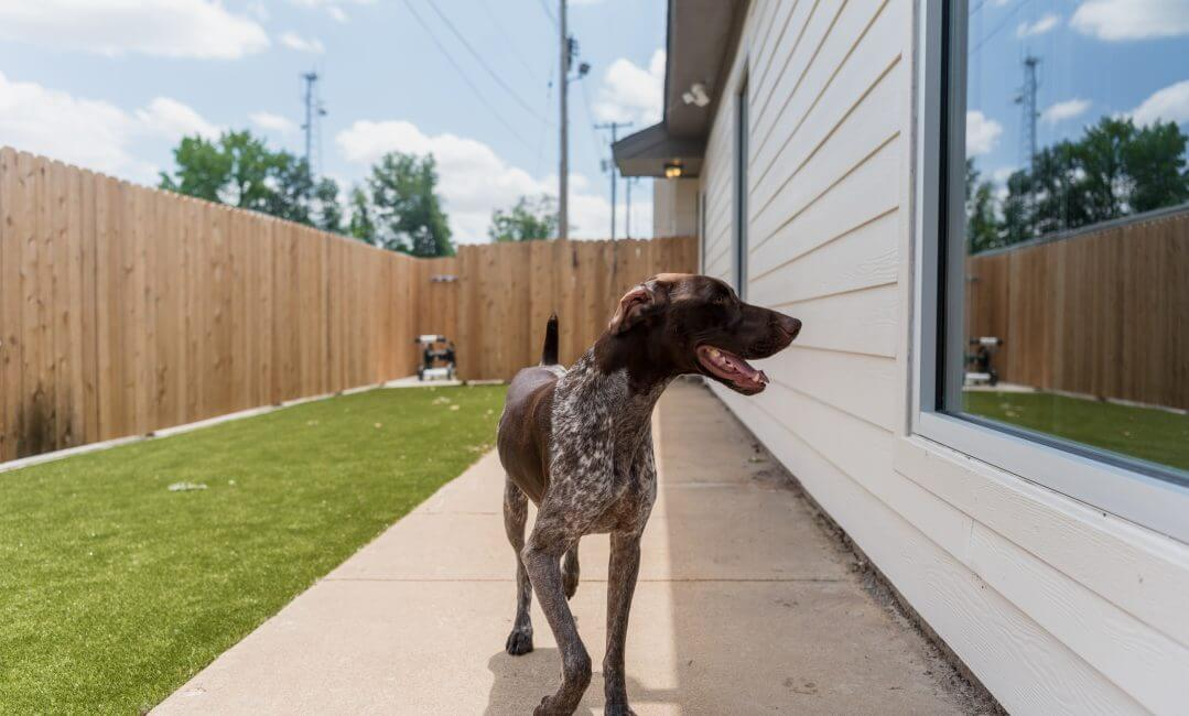 Midtown Doggie daycare yard