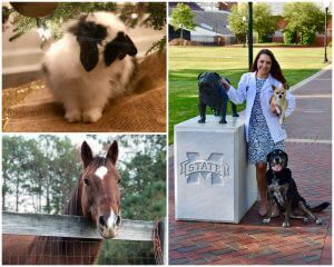 Dr. Opp's Pets